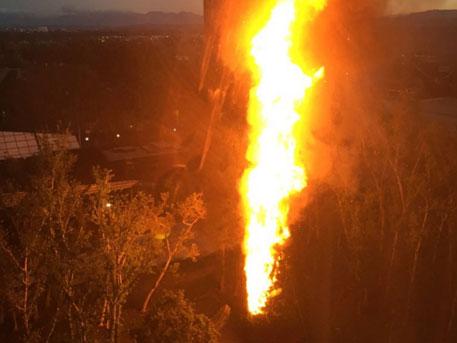 ВКалифорнии сгорела рождественская елка стоимостью $120 тыс.