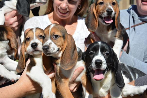 Cornell University       Семь уникальных щенков