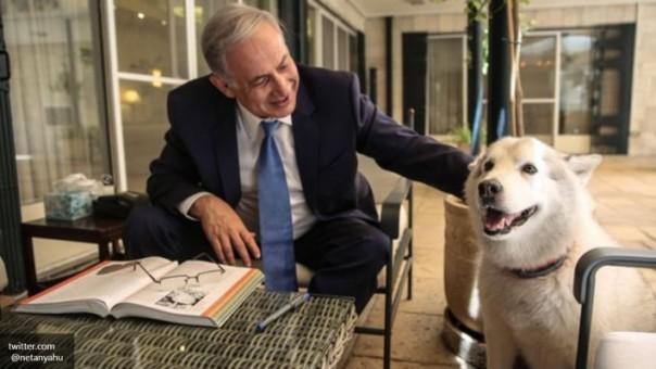 Собачка Нетаньяху покусала депутата парламента