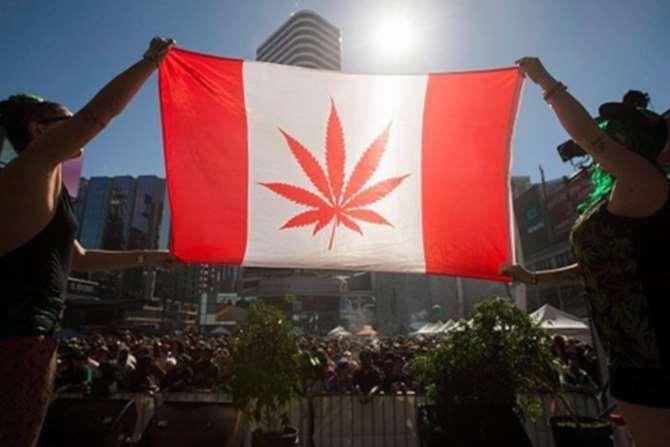 Легализация марихуаны швейцария семена марихуаны купить спб