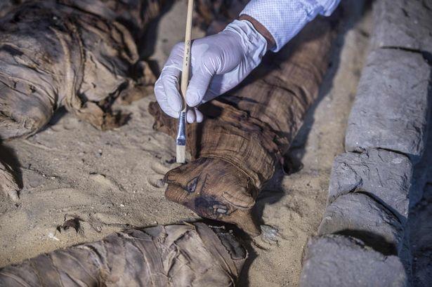 ВЕгипте археологи обнаружили гробницы смумиями животных