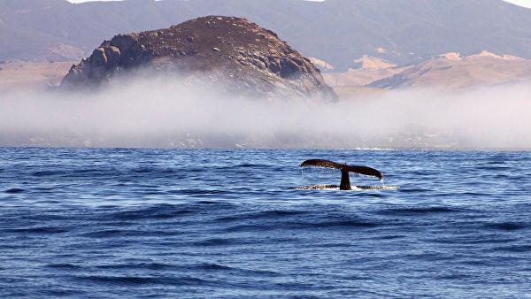 Япония, «наплевав» намир, начала бойню китов