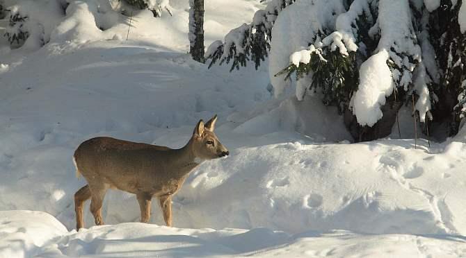 ВБашкирии задержали высокопоставленных чиновников-браконьеров