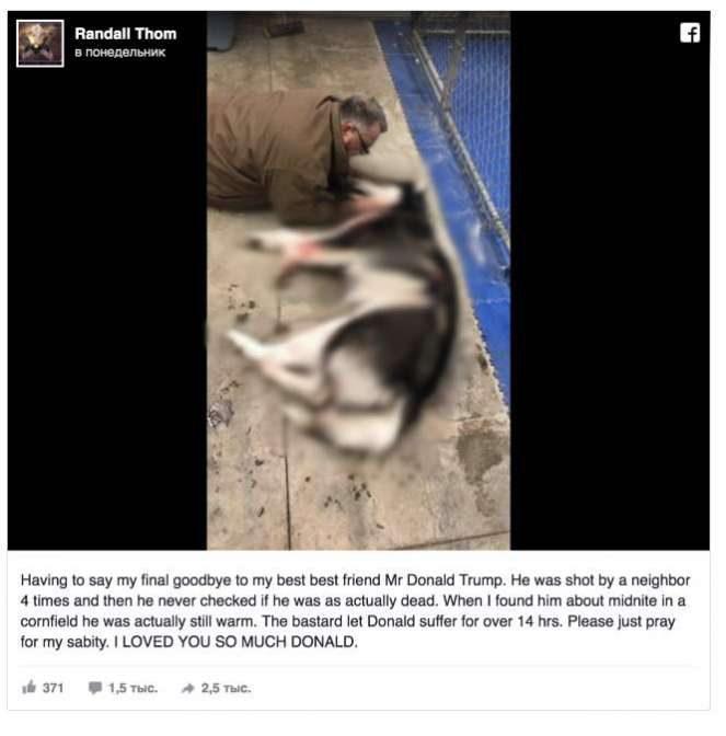ВМиннесоте застрелили собаку покличке Трамп
