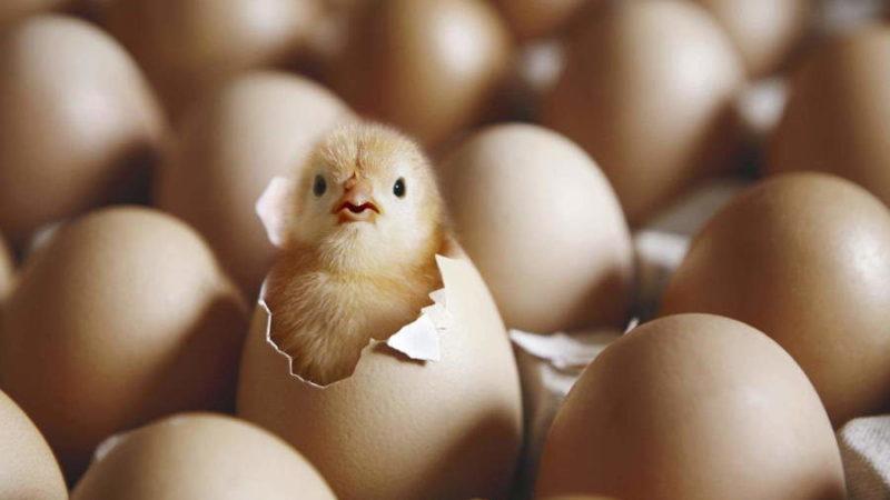 Курица или яйцо? Что возникло раньше